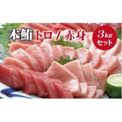 【串本町×北山村】本マグロ(養殖)トロ&赤身セット 3kg