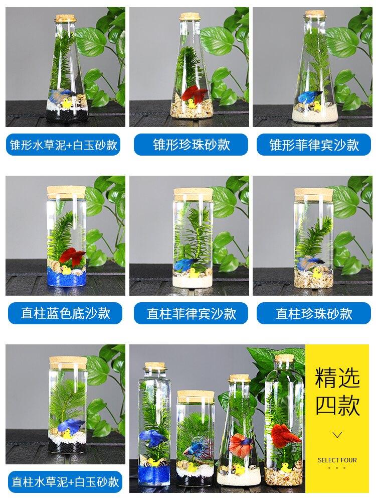 生態瓶魚微景觀免換水斗魚瓶生態魚瓶水族寵物斗魚活體專用缸diy(不送魚)
