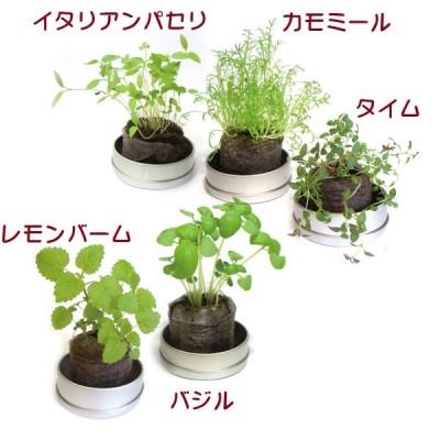 リトルハーブ  ギフト用ラッピング付き  小さなハーブの栽培セット  花、ガーデニング   種、種子  栽培キット  ハーブ