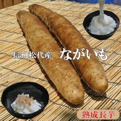 信州松代産長芋!山芋!食欲増進健康長いも! 【3kg優品長いも2〜3本】