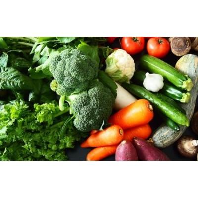 K1667【ふるさと納税限定】さかいの採れたて野菜セット