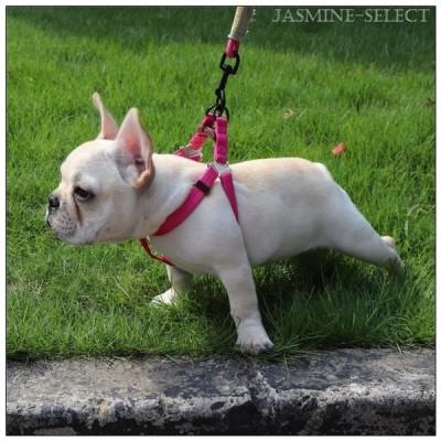 リード ハーネス 2点セット 犬用品 小型犬 色豊富 カラフル 首輪 ロープ 縄 お散歩 ペット シンプル かわいい ドッグ アウトドア