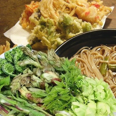 山菜セット 天ぷら 山菜天ぷら  レシピ セット(お買得たっぷり17~20人前位)ご予約開始(発送は4/下旬〜5/5)