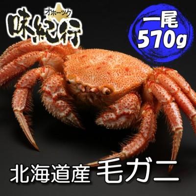 毛ガニ 北海道産 約570g 1尾入り ボイル済 ギフト カニ かに 蟹