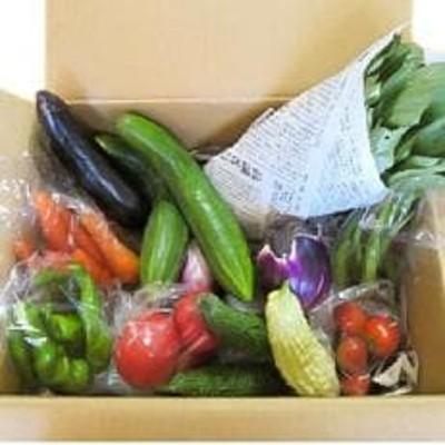 【愛川ブランド】自然農法の「季節のおまかせ野菜セット」