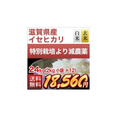 お米 滋賀県産 イセヒカリ 24kg (2kg×12袋) 令和2年(2020年)【減農薬】【白米・玄米 選択】【送料無料・米袋は真空包装】