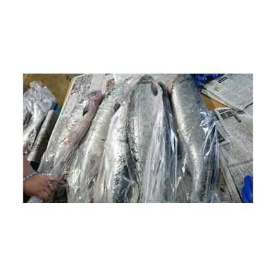 北海道/秋鮭(さけ)生(朝どれ)4.5kg-4.9kg脂の乗った雄鮭(銀毛)急速冷凍