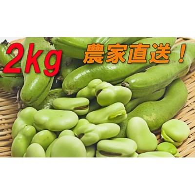 【先行受付】『そら豆/ソラマメ 2kg』農家直送!発送当日に収穫します!5月上旬より順次発送