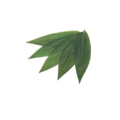 バラン 笹の葉 生笹ロング(200枚)約90×320