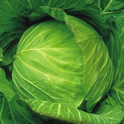 種 野菜たね キャベツ F1ふゆあまちゃん 1袋(2ml) / 野菜のタネ 野菜 種子 国華園