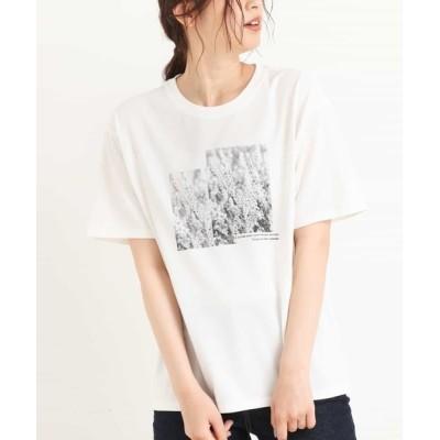 a.v.v / フォトプリントTシャツ WOMEN トップス > Tシャツ/カットソー