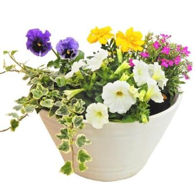 花とガーデンリーフ おまかせ5ポットセット アメンダー小袋つき【送料込み】 /同梱不可