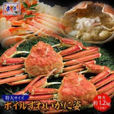 かに カニ 蟹 訳あり ボイルずわいがに姿【特大】2尾 約1.2kg ズワイ蟹 ずわいがに ズワイガニ 姿[送料無料] 早割 激安 かに鍋 お取