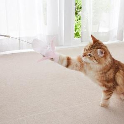 ペットクイーン PQ猫じゃらし 3本セット ピンク 猫用おもちゃ