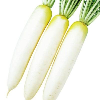 ダイコン 種 野菜たね F1春助(はるすけ) 1袋(3ml) / 野菜のタネ 野菜 種子 国華園