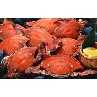 天然の好漁場・肥沃な海の贅沢な恵み 有明海のカニ