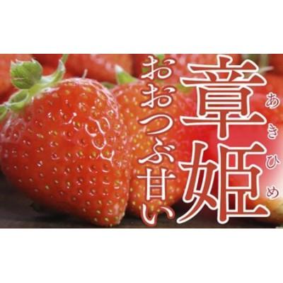 大粒で甘い!坪井農園のこだわりいちご(章姫)1箱【2021年4月から順次発送】