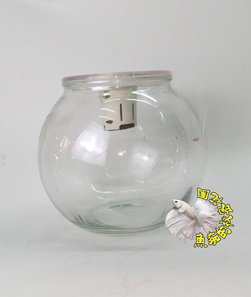 [大玻璃球狀水耕盆栽 水耕植物專用花器]植物可以另外加購 ☆居家.店面.櫥窗.玄關擺飾.園藝☆
