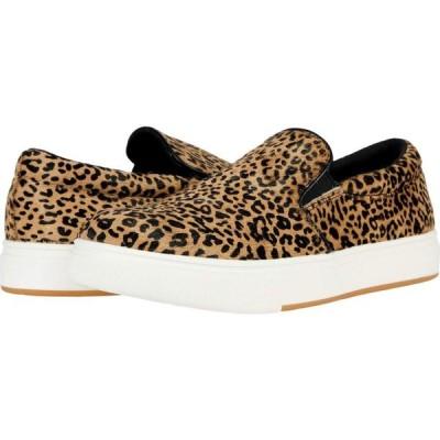 スティーブ マデン Steve Madden レディース スニーカー シューズ・靴 Coulter-L Sneaker Leopard