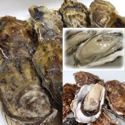 北海道(厚岸産)(貝牡蛎)Lサイズ10個入り
