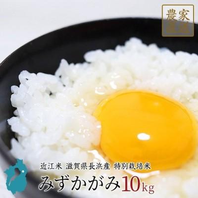 みずかがみ 10kg 米 令和2年産 美味しい 近江米 白米 玄米 特別栽培米