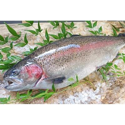 【2609-0142】栃木県のブランド魚「プレミアムヤシオマス」の刺身(生食用) 4、5人前