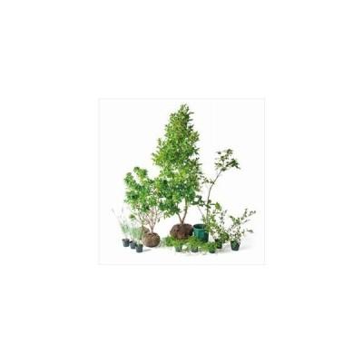 オンリーワン 香で選ぶ 植栽セット フレグラント ポートワイン 5感で選べるセット KJ6-SET03