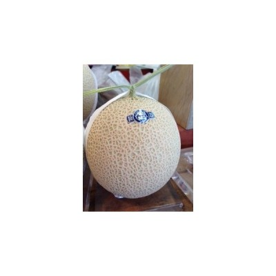 静岡産マスクメロン 1.3kg 1玉