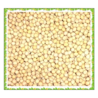 北海道産 白大豆 生 1kg 無添加 生大豆