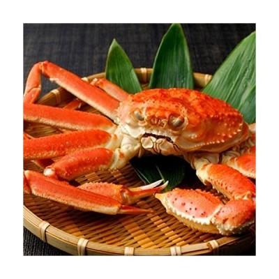 ズワイガニ姿 天然ボイル 本ずわいがに たっぷり蟹味噌 大サイズ 良品選別済 (500g1枚)