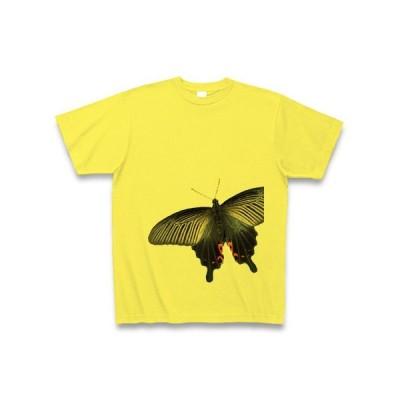 蝶 クロアゲハの写真2