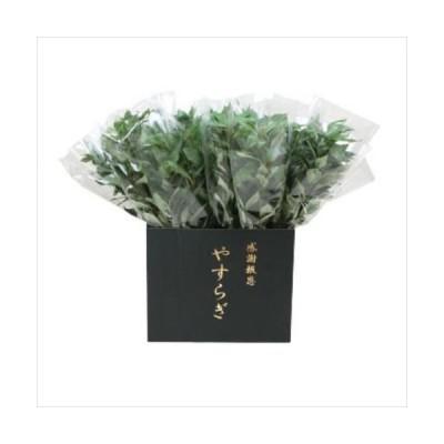 ニューホンコン造花 シキミ(ラップ入・展示箱付)グリーン30本入  142501 (APIs)