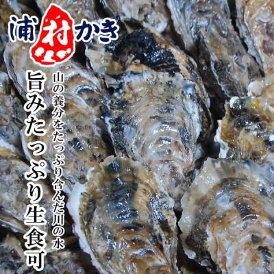 浦村牡蠣 生食用 4〜4.5kg 40〜50個入 三重県 モトかき養殖場 殻付き生カキ 牡蠣 殻付き カキフライ かき カキ 牡蛎 取り寄せ
