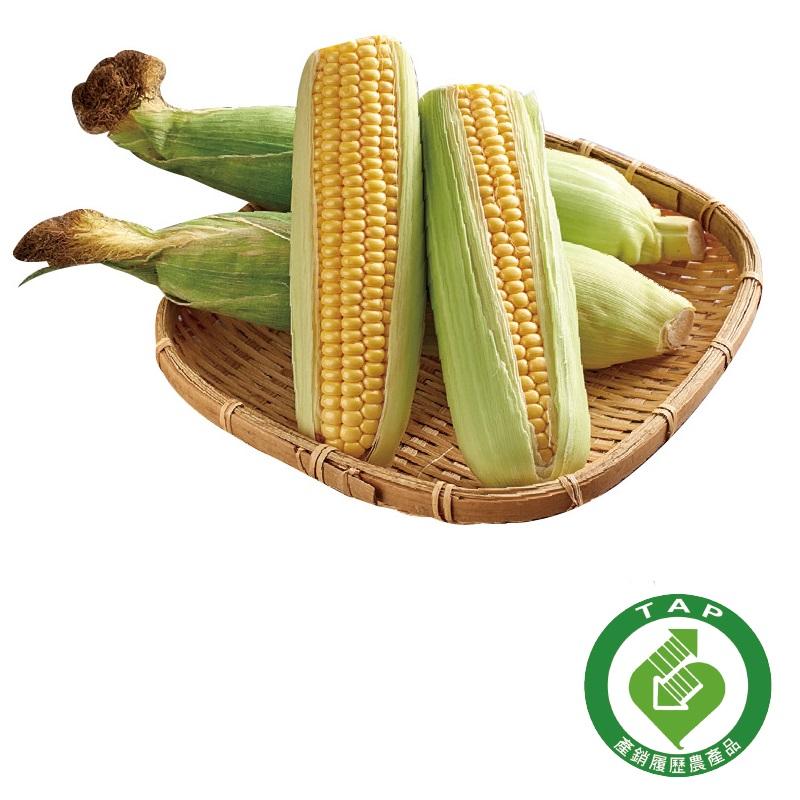 履歷玉米2入