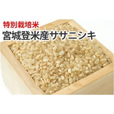 特別栽培米・宮城登米産ササニシキ【玄米】1kg