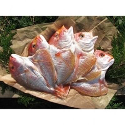 丹後のお魚屋さん一押しの絶品レンコダイの一夜干し5枚(冷蔵)