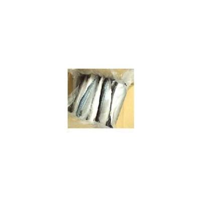 ★「鯖(サバ)フィーレ」 薄塩・昆布じめ 約5キロ(22〜30枚入) 業務用★鯖の片身「焼きサバ寿司」に!