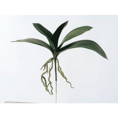 《 造花 》◆とりよせ品◆Asca(アスカ) オーキッドリーフ グリーン