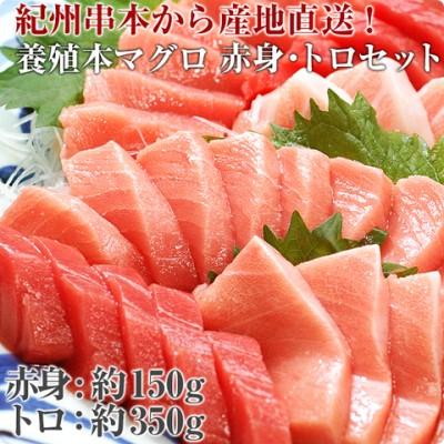 本マグロ トロ 赤身 500gセット 紀州串本産 養殖 まぐろ マグロ 鮪 刺身 柵 冷凍 ギフト
