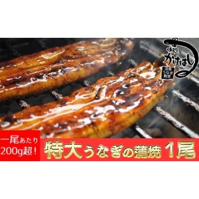 特上 うなぎの蒲焼き 1尾 秘伝のタレ付