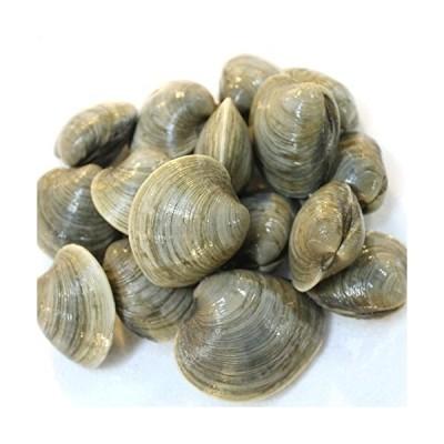 ホンビノス貝 大アサリ 白ハマグリ 白蛤 中 約5kg(築地直送)愛知/千葉 他ビノス5K