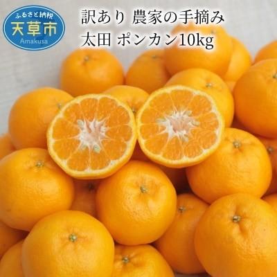 訳あり 農家の手摘み 太田 ポンカン10kg〈先行受付〉_S040-012