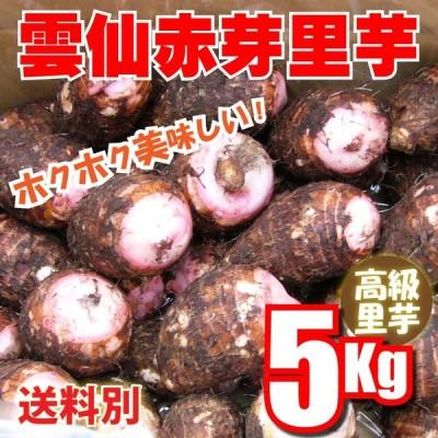 里いも  雲仙島原産 赤芽里芋 5Kg混合サイズ 無農薬栽培