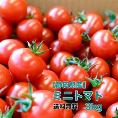 【静岡県産】ミニトマト 3kg 送料無料 トマト お弁当 サラダ 野菜