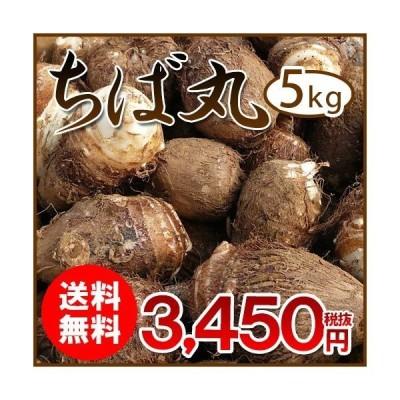 千葉県産 里芋 ちば丸 5kg LMサイズ