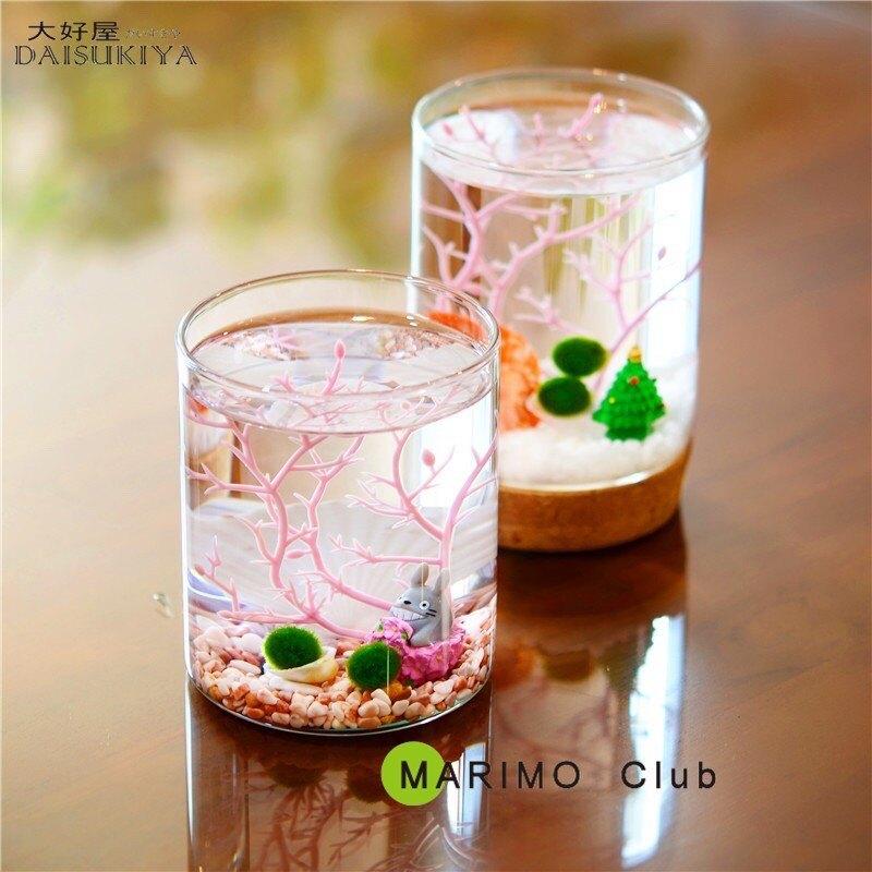 大好屋 台灣現貨 綠球藻 Marimo 綠球藻 畢業季 生日禮物 情人節禮物 微景觀幸福海藻球 微景觀生態瓶創意禮物