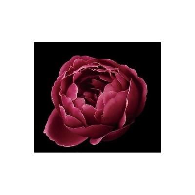 造花 サンセイ NY-032フリル 大 #23ワイン 569182 01  造花 花材「ら行」 ラナンキュラス