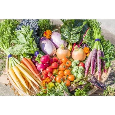 フレッシュグループ淡路島の香るハーブと彩り野菜セット 季節の12〜14種の厳選こだわり詰合わせ