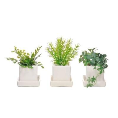 フェイクグリーン 人工観葉植物 造花 ミニ ミリオン・シュガーバイン・アジアンタム 皿付ミニベース(3個セットA) PRIMA PRGR-1195-SE