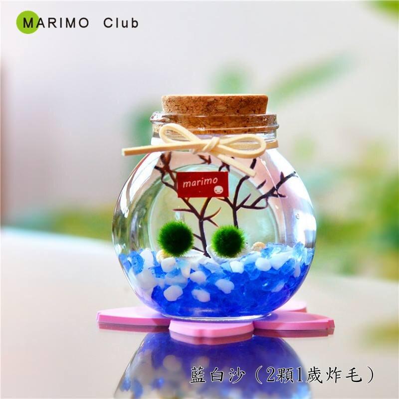 大好屋 台灣現貨 marimo綠球藻 教師節生日禮物 日本幸福海藻球開運瓶生態瓶 創意桌面植物結婚桌上禮生日禮物~
